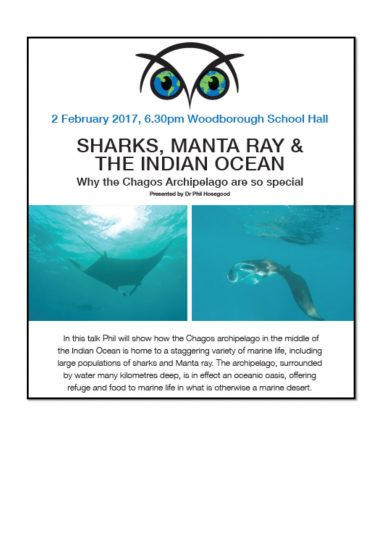 Sharks, Manta Ray & The Indian Ocean